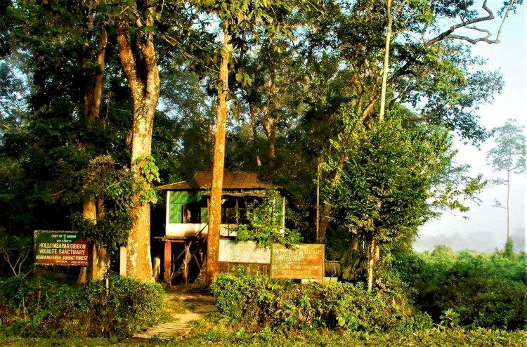 Entrance to Hollongapar Sanctuary