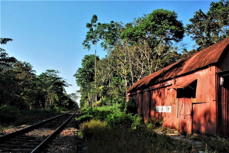 Railway track inside hollongapar santuary