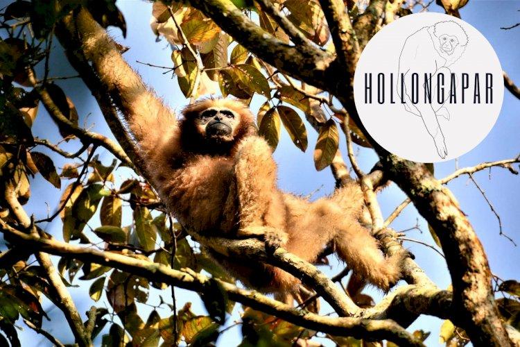 Meeting the Primates of Hollongapar