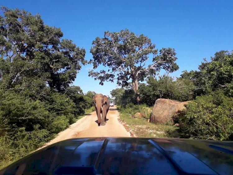 YALA National Park – Glorious Spectacle of Wildlife…!