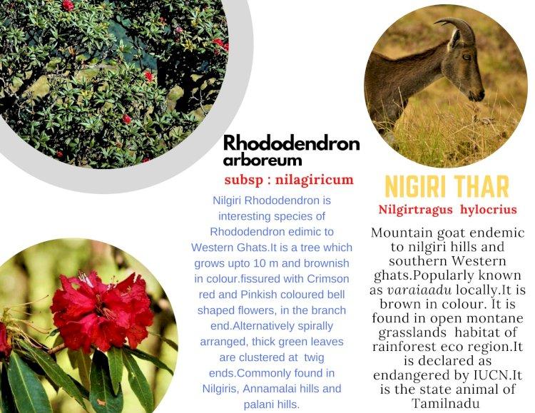 Rhododendron flower in Meesapulimala Trek