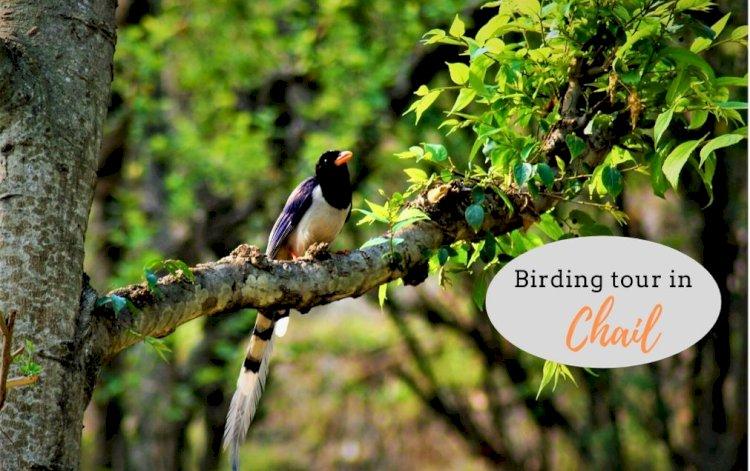 Birding Tour in Chail