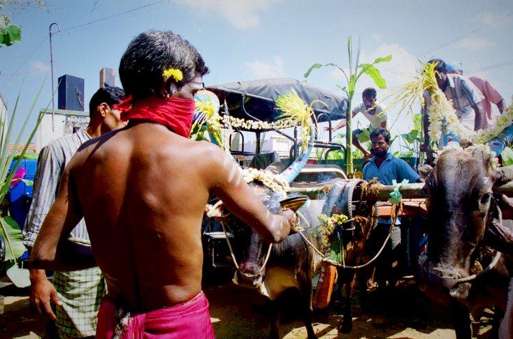 puja during faecal festival gumtapura