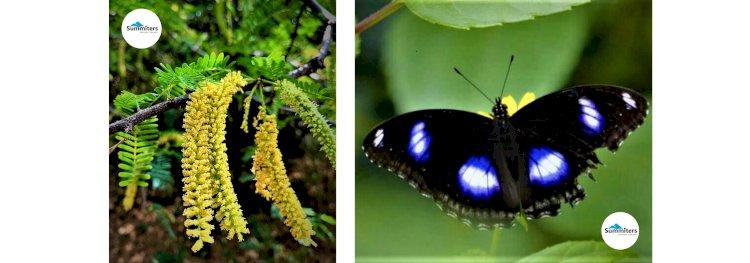 Flora and fauna Jogimatti Reserve forest Davalappana Gudda Trek